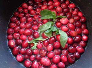 Making cranberry & mint jam